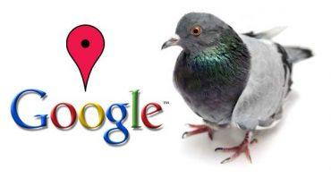 Hvad er google pigeon